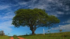 Colorful Tree 2 - Ecological Issue Stock Footage