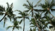 Stock Video Footage of Palm trees in tropics Hawaii Waikiki beach