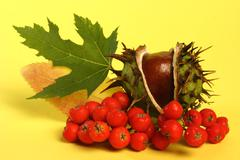 Fall composition on yellow background Stock Photos