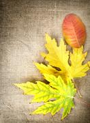 autumn decoration on a canvas - stock photo