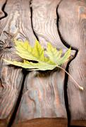 Stock Photo of autumn leaf on a wooden table
