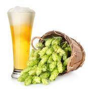beer and hop in basket - stock photo