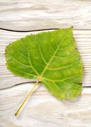 Poplar leaf on a wooden background Stock Photos
