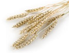 stalks of wheat - stock photo
