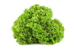 Bush lettuce isolated Stock Photos