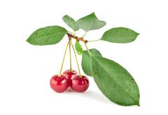 Stock Photo of red cherry