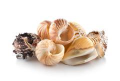 Stock Photo of sea shells