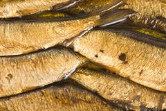 background of the fish - stock photo