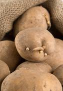 Old potatoes in a bag Stock Photos
