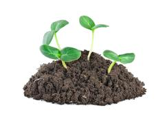 young green plants - stock photo