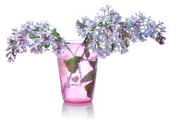 Lilacs in a glass Stock Photos
