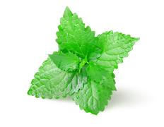 green mint - stock photo