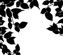 Black white leaves Stock Photos