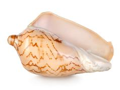 Colorful sea shell isolated on a white Stock Photos