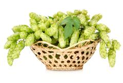 Stock Photo of hops in a basket isolated