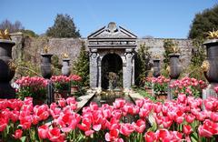 castle garden arundel tulips - stock photo
