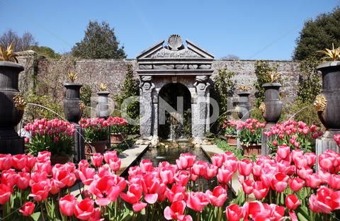 Stock photo of castle garden arundel tulips
