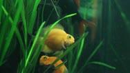Aquarium fish. Stock Footage