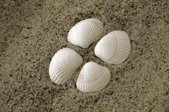 Stock Photo of seashell beach sand