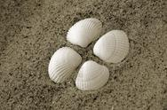 Stock Photo of seashell beach sand