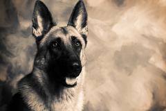 dog german shepherd - stock photo