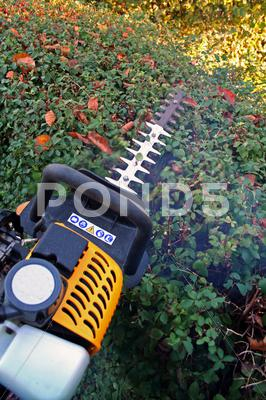 Stock photo of hedge cutting petrol cutter