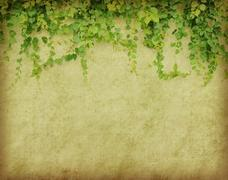 Green ivy on old grunge antique paper texture Stock Photos