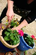 planting gardening - stock photo