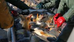 Freshwater Fish - stock footage