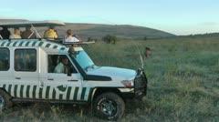 Safari in Kenya Stock Footage