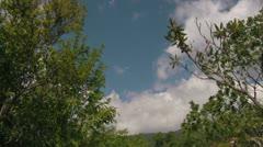 Tilt Down onto Wooden Stairs on a Blue Ridge Mountain Trail Stock Footage