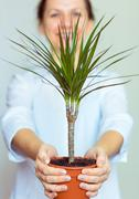 Smiling office worker girl holding a potted plant Stock Photos