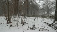 Stock Video Footage of winter in forest