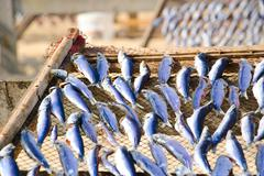 Fish drying closeup Stock Photos