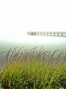 Sea Grass on the Halifax River Stock Photos