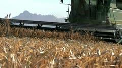 Harvesting Sorghum Combine Stock Footage