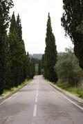 road with tree lane - stock photo