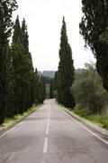 Road with tree lane Stock Photos