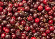 Stock Photo of lots of cherries.