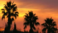 Silhouetted Palm Sunset Stock Footage