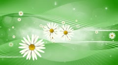 Daisy Dreams Stock Footage