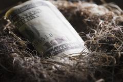 One hundred dollar bill in bird's nest Stock Photos