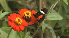 Butterfly, Butterflies, Insects, Flowers Stock Footage
