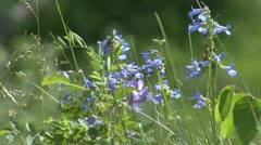 Wildflowers - stock footage