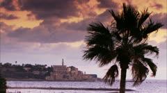 Windy palm tree on Purple Sky at Beach Stock Footage