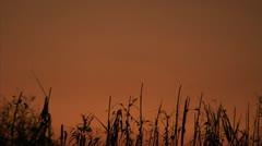 Everglades Twilight Tall Grass Sways in Orange Sky, the Everglades Florida Video Stock Footage