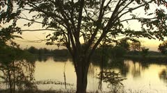 Trees by the Rice Paddy Still Water at Dusk Through Trees Video Stock Footage