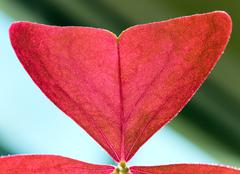 Macro - fragment of red window plant leaf Stock Photos