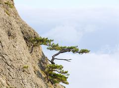 trees on rocks slope - stock photo