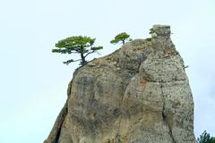 Trees on rocks top Stock Photos